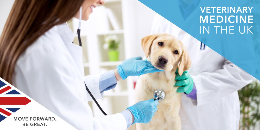Best Veterinary Medicine Universities